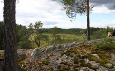 Walking in the uncultivated forest and swampland, Sipoo. Finland, Walking, Country Roads, Plants, Summer, Summer Time, Walks, Plant, Hiking