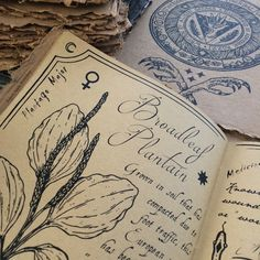 Broadleaf Plantain // The Hedge Witch's Herbal Grimoire, written by Alison Garber (Native Apothecary) and Adrienne Rozzi (Poison Apple Printshop). Screenprinted and bound by hand, limited edition of 80. (sold out)