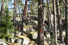 Follow the red dots on the trees along the path in the Virvik forrest.