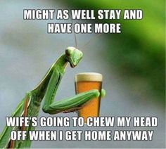 Get your laugh on to these 22 Hilarious Beer Memes For National Beer Day! Funny Animal Pictures, Funny Images, Funny Animals, Funny Photos, Funniest Pictures, Adorable Animals, Baby Animals, Beer Memes, Beer Humor