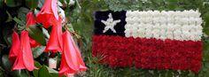 El copihue (Lapageria rosea) nuestra hermosa flor nacional, se viste de rojo, blanco o rosado, dependiendo del lugar.  Viene de las montañas de Chile, donde las temperaturas son suaves y las noches son más frescas, no puede prosperar en zonas más cálidas. Es considerado por muchos como una de las más hermosas vides florecientes en el mundo, fue legítimamente elegido como la flor nacional de Chile.