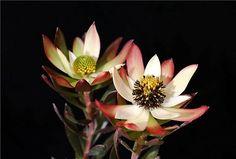 1444666990866_bulletin (640×432) Plants, Plant, Planting, Planets