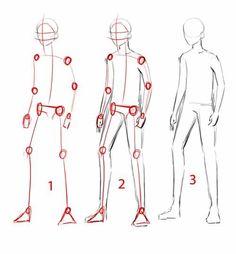 Disegno anatomico.: