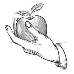 Illustration of hand holding an apple Hand Drawing Reference, Art Reference Poses, Holding Hands Drawing, Drawing Hands, Drawing Drawing, Draw On Photos, Pictures To Draw, Apple Sketch, Drawing Apple