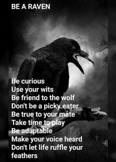 difference black crows and ravens Magick, Witchcraft, Raven Quotes, Raven Pictures, Viking Quotes, Pagan Witch, Wiccan, Witches, Raven Tattoo