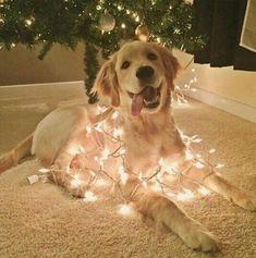Imagem de christmas, dog, and lights