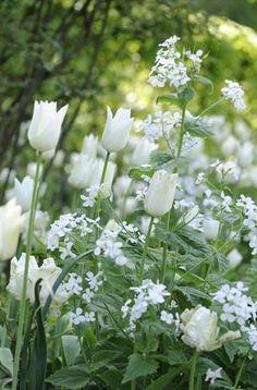 A woodland garden - White Tulips! Beautiful Flowers, Garden Inspiration, Beautiful Gardens, White Flowers, Planting Flowers, Flowers, Tulips, Woodland Garden, White Gardens