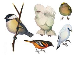 Fat Birds 2 by *CoyoteMange on deviantART