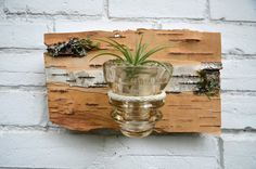 Metal Wall Sconces For Plants : 1000+ images about Wall sconce flower arrangement on Pinterest Air plants, Wall sconces and ...