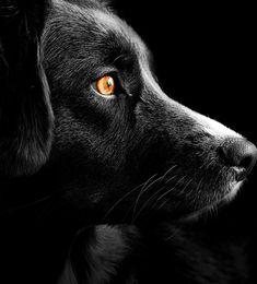 #cbdoil#cbdnearme#arizonasunset#painrelief#anxietyrelief#cbdexperts#masteroil#askthechemist#mesaaz Greenbean Casserole Recipe, Chemist, Labrador Retriever, Labrador Retrievers, Labrador, Labrador Retriever Dog