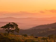 not so much interested in the rhino, but the gorgeous pinks and oranges of the sunset in the background