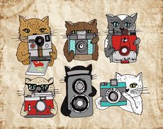 """Cats Love Cameras"" by Andrea Lauren"