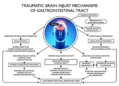 Medical Paper on the Effects of Traumatic Brain Injury Upon the Vagus Nerve and the Digestive Tract ==> Neural Retraining Can Help to Reset the Gut/Brain (Vagul Nerve) Axis