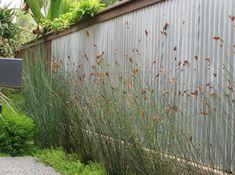 corrugated metal fencing , pretty
