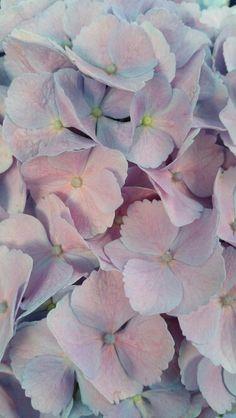 Serenity und Rose Quarz gehören auch in der Natur zusammen! #nature #flowers #serenity
