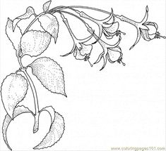 flower Page Printable Coloring Sheets | Coloring Pages Fuchsia 1 (Natural World > Flowers) - free printable ...