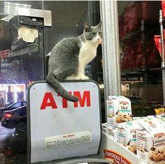 Bodega cat 💖