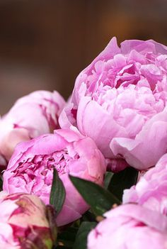 Herlige, sommerlige peoner. Peony, Decorations, Future, Rose, Flowers, Plants, Future Tense, Pink, Dekoration