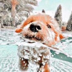 Super Cute Puppies, Baby Animals Super Cute, Cute Baby Dogs, Cute Little Puppies, Cute Dogs And Puppies, Cute Little Animals, Cute Funny Animals, Pics Of Cute Dogs, Cute Puppy Pics