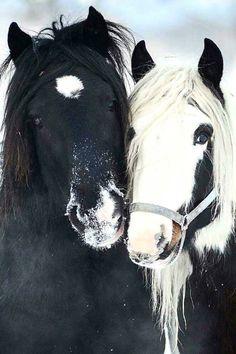 ##horses - Olly Ferri - Google+