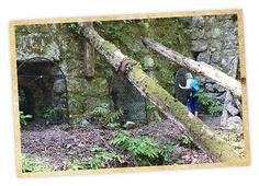 Fall Creek Unit Hike in Spring - Henry Cowell Redwoods State Park SC