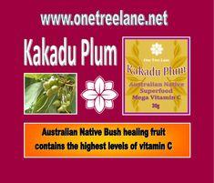 Vitamin C, Seed Oil, Superfood, Health Benefits, Plum, Healing, Fruit