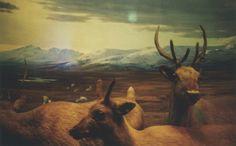 Colour Deer Print by treefox.etsy