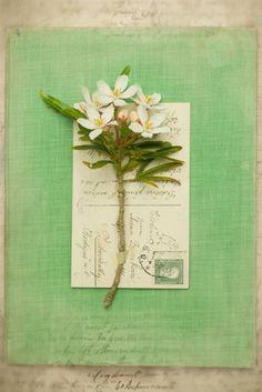 Alighien - Deborah Schenck Prints - Easyart.com