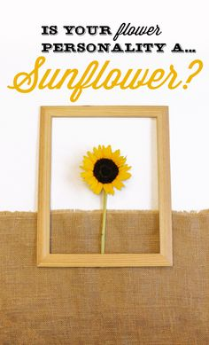#lonestarliving Are you a Sunflower? You tend to be a little ray of sunshine. You are very social, hence why you like to surround yourself with family and friends. People like your forever-positive contribution and fresh view on things. Share with us your flower personality for a chance to win $100 VISA gift card.