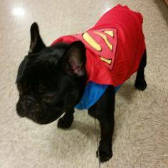 Frankie's Halloween Costume