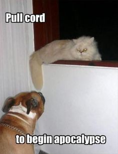 funny cats and dogs  Don't forget to also check out our website at treatsunleashed.com #buffalony #pets #petsupplies #newyorkpetsupplies #buffalonypetsupply #cats #dogs #funny