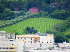 Ancona, Marche, Italy - Trees in the countryside- miniature6 - by Gianni Del Bufalo CC BY-NC-SA by gianni del bufalo