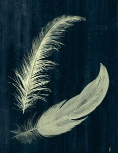 Items similar to Two Feathers - Yellow on Dark Blue - Giclee Print on Etsy Feather Painting, Feather Art, White Feathers, Bird Feathers, Hope Is The Thing With Feathers, Natural Forms, I Tattoo, Tatoos, Art Photography
