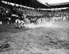The chaotic calf scramble at the Texas Prison Rodeo represents one of the first desegregated sporting events of the 1940s.