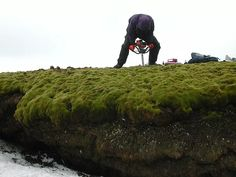 antarctic moss | Climate change is turning Antarctica green | NowScience - Daily Science & Technology News