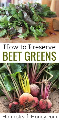 Next Time You Harvest Beets, Don't Compost The Tops Beet Greens Are Delicious Fresh Or Preserved. Here's How To Preserve Beet Greens For Freezing. You'll Love Adding Them To Soups, Stews, And Casseroles All Winter Long How To Store Beets, Beet Recipes, Canning Recipes, Healthy Recipes, Fresh Beets, Fall Vegetables, Fermented Foods, Preserving Food, Compost