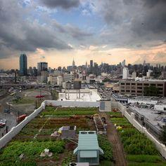 rooftop garden, ABC Kitchen #NYC #newyork #green #eco