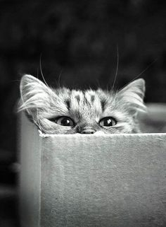 """""""Cats are cute.  Cats in boxes are even cuter.  They know this and make the most of it."""" --Author Unknown"""