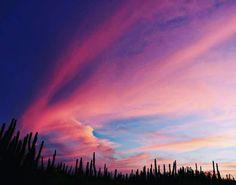"@enmawel nos comparte ""sunset"" Usando #igersfalcon  #instasize #peninsuladeparaguana #paraguana #Venezuela #puntofijoguia #igersfalcon #atardecer #puestadesol #l4l #likeforlike #igersvenezuela #photo #igers #photographer #photooftheday"