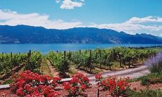 As the ideal wine valley, the Okanagan is known for its picturesque wineries that overlook Okanagan Lake. The climate and setting of the Okanagan Valley provides the perfect conditions for wine grapes. The quality of grapes grown here produce some of the best wines in Canada and are known throughout the world.