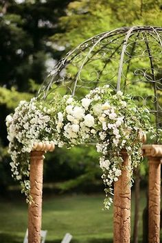 for climbing roses