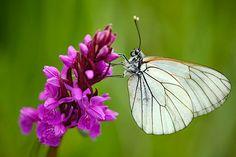 Dvě barvy, které nesmí na Vašich fotkách chybět | Josef Cvrček Insects, Nature, Animals, Pictures, Naturaleza, Animales, Animaux, Animal, Animais