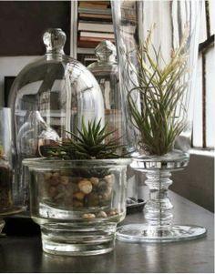 air plants and succulent. love the bell jar. Air Plants, Indoor Plants, Indoor Garden, Home And Garden, Garden Tips, Garden Terrarium, Glass Containers, Small Gardens, Houseplants