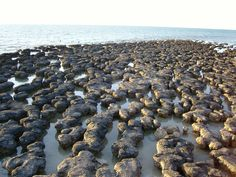 See the Shark Bay, stromatolites Places Ive Been, Shark, Red And White, Bucket, Australia, Landscape, Natural, Outdoor, Outdoors