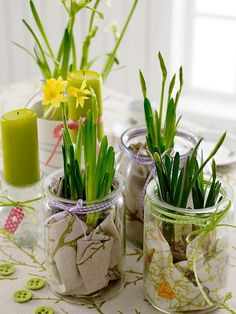 the freshness of spring
