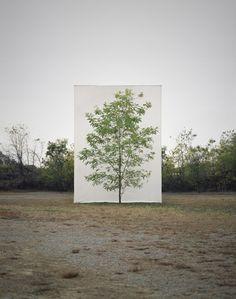 Myeongbeom Kim, el artista de los árboles viajeros