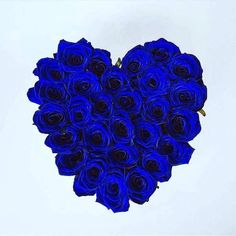 Rosas Azules Beautiful Rose Flowers, Flowers For You, Love Rose, Love Wallpapers Romantic, Blue Wallpapers, Blue Roses Wallpaper, Flower Words, Nylon Flowers, Special Images