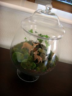 Old bag of aquarium pebbles, activated carbon from the pet store, potting soil from the shed, found ivy, moss, and rocks, deer from the craft store, and glass jar from Ross.    Total cost: around $16. Having a miniature forest in our livingroom: pricel