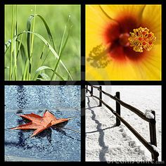 The green of summer, yellow flowers of spring, red leaves of fall and snowy fence in winter