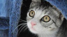 Was tun bei einer Katzenallergie? – Neue Therapien in Sicht